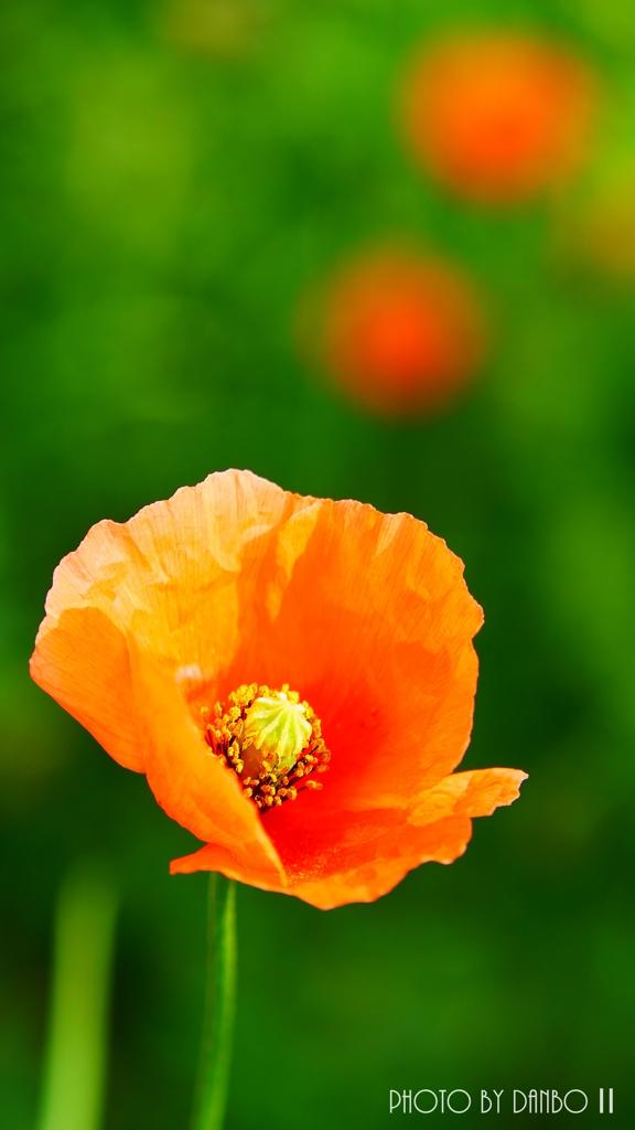 繁栄の花 <4>
