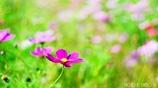 こんな小春日和の 穏やかな日は・・・ <6>