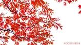 Wax tree <3>