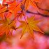 秋に染まる <10>