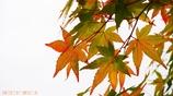 小さい秋 <12>