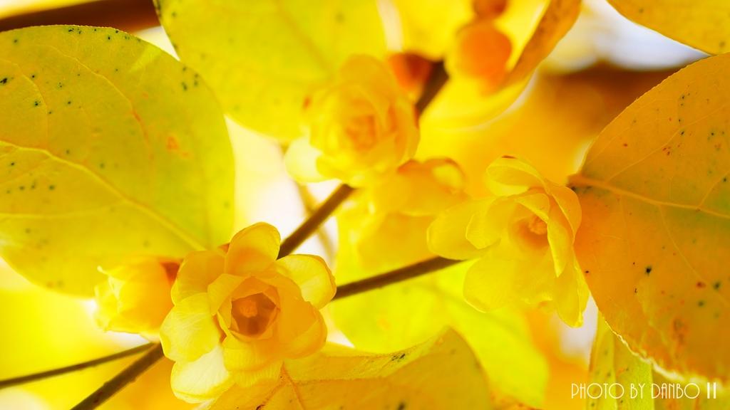 慈愛の花 <2>