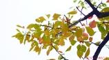 小さい秋 <11>