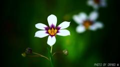 野に咲く花 <15>