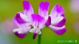 春の野草花 <4-2>