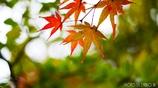 秋に染まる <13>