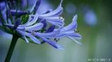 愛の花 <4>