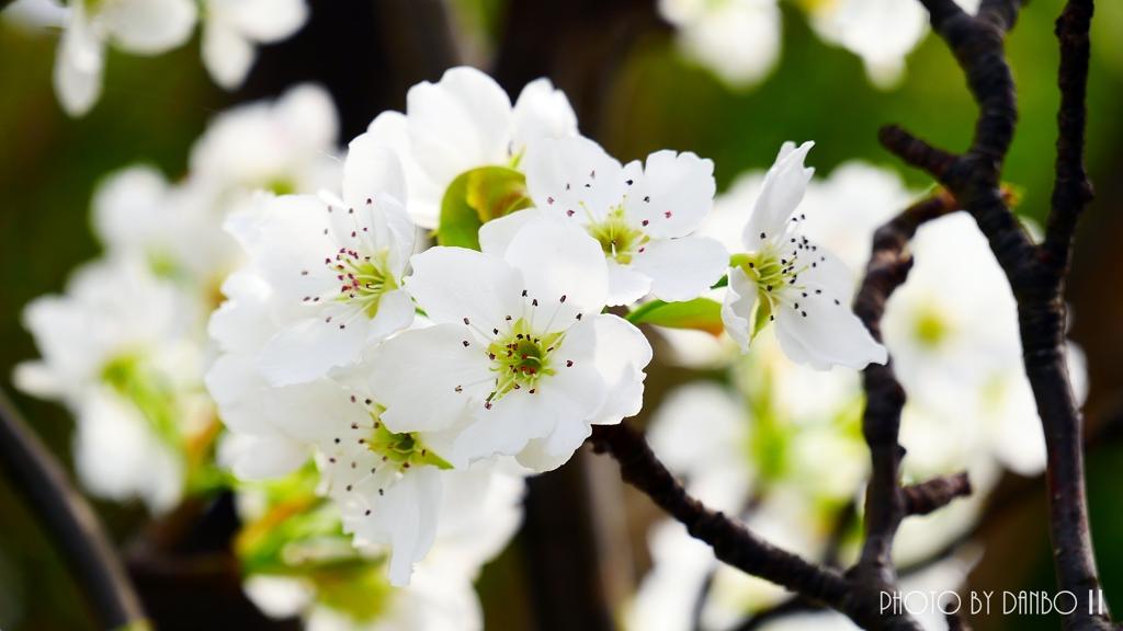 博愛の花 <3>