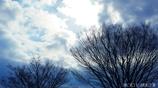 冬の欅丘 <1>