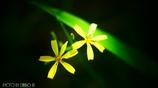 僅かに咲く花 <3>