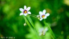 野に咲く花 <13>