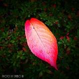 小さい秋 <36>