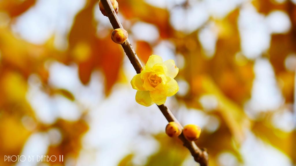 慈愛の花 <1>