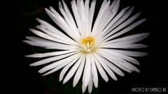 純白の煌き <3>