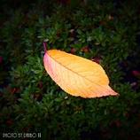 小さい秋 <35>