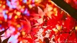 秋に染まる <3>