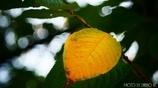 小さい秋 <9>