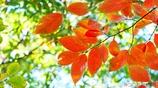 秋に染まる <24>