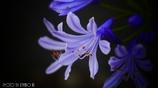 愛の花 <6>