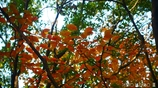 それぞれの秋 <23>