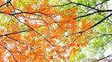 Wax tree <1>