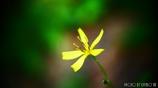 僅かに咲く花 <1>