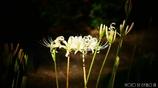 天上に咲く白花 <1>