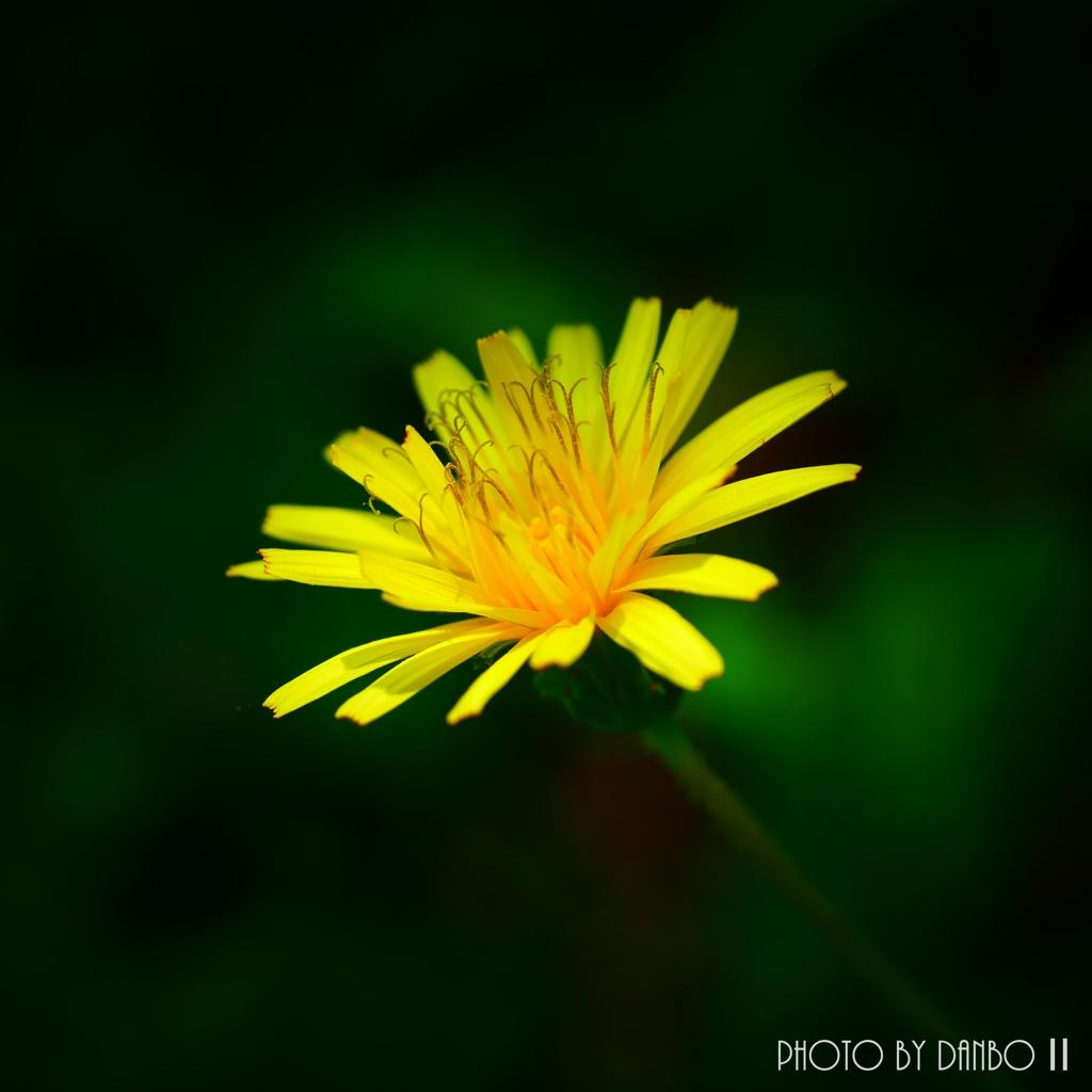黄色い花 <2>