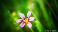 野に咲く花 <19>