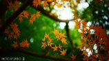 秋なんだなぁ~ <24>
