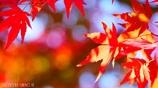 秋に染まる <1>