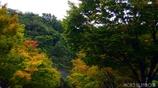秋への誘い <1>