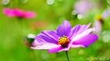 こんな小春日和の 穏やかな日は・・・ <4>
