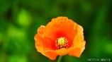 繁栄の花 <5>