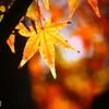 秋なんだなぁ~ <2>
