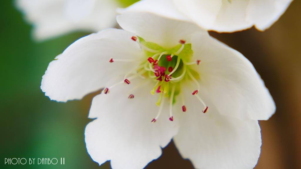 博愛の花 <4>