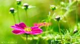 こんな小春日和の 穏やかな日は・・・ <5>