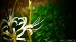 天上に咲く白花 <4>