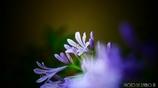 愛の花 <12>