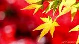 秋に染まる <30>