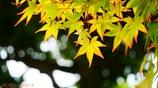 小さい秋 <3>