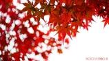 秋に染まる <15>