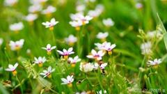 野に咲く花 <14>