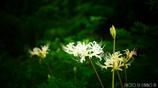 天上に咲く白花 <3>