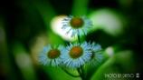 春の野草花 <9-1>