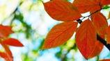 秋に染まる <5>