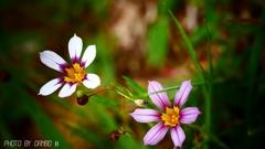 野に咲く花 <25>