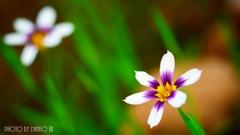 春の最新開花情報 <2>