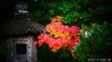 秋に染まる <8>