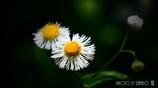 春の野草花 <9-4>
